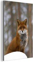 Rode vos in het bos Aluminium 40x60 cm - Foto print op Aluminium (metaal wanddecoratie)