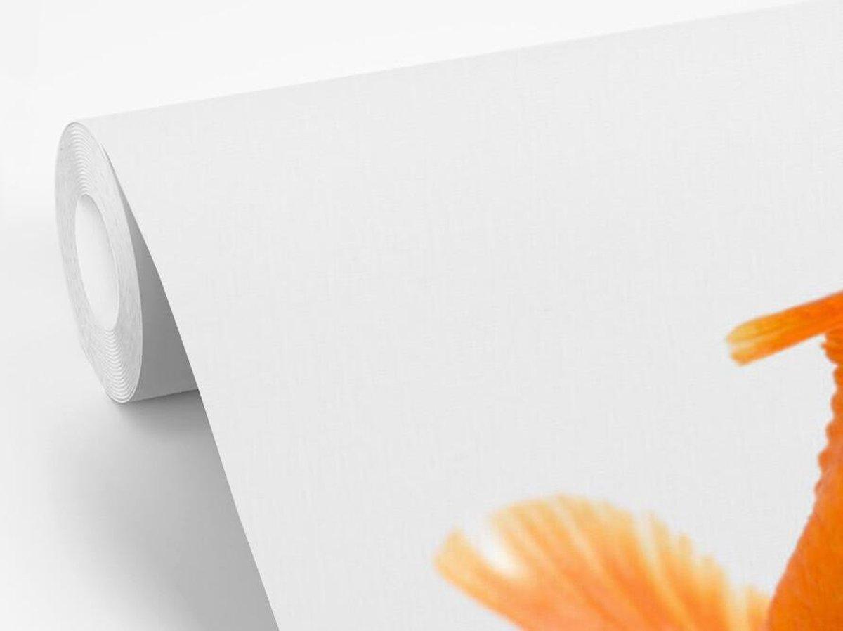 Fotobehang Goudvis op witte achtergrond - Goudvis op witte achtergond breedte 265 cm x hoogte 220 cm