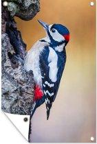 Tuinposter Close-up Vogels - Close-up van een grote bonte specht op een boomstam tuinposter los doek 40x60 cm - Tuindoek/Buitencanvas/Schilderijen voor buiten (tuin decoratie)