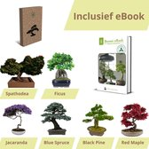 Bonsai zaden 6 soorten - Bonsai starters kit - Bonsai boompje - Kamerplanten - Moederdag - Incl. E-book