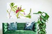 Mediteranean flower / Wanddecoratie / Foto op kunststof (Forex) / Canvasdoek kunststof / 60 x 40
