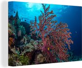 Close-up van een koraal in het Nationaal park Wakatobi Canvas 120x80 cm - Foto print op Canvas schilderij (Wanddecoratie woonkamer / slaapkamer)