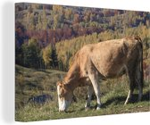 Koe in het heuvellandschap van het Nationaal park Piatra Craiului in Roemenië Canvas 60x40 cm - Foto print op Canvas schilderij (Wanddecoratie woonkamer / slaapkamer)