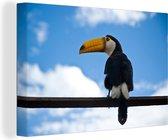 Reuzentoekan tegen de blauwe hemel Canvas 140x90 cm - Foto print op Canvas schilderij (Wanddecoratie woonkamer / slaapkamer)