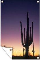 Tuinposter - Saguaro cactus met zonsondergang - 120x180 cm - XXL