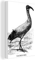 Zwart-wit illustratie van de heilige ibis 20x30 cm - klein - Foto print op Canvas schilderij (Wanddecoratie woonkamer / slaapkamer)