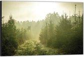 Dibond –Weg tussen de Bomen– 40x30 Foto op Aluminium (Wanddecoratie van metaal)