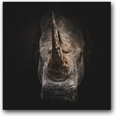 Dibond 100 x 100 cm Animal Photography.