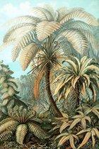 Filicinae op Plexiglas (kleur) | Staand 80 x 120 cm | Meesterwerk van Ernst Haeckel | Bekende Kunstwerken en Schilderijen | Wanddecoratie voor binnen en buiten | Oude Meesters op Acrylglas