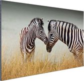 Zebras  Aluminium 120x80 cm - Foto print op Aluminium (metaal wanddecoratie)
