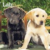 Lab Puppies 2021 Mini 7x7