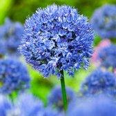 25x Allium stipitatum 'Fantasia' - Sierui Mix - Blauw - Winterhard - 25 bloembollen Ø 12-14 cm