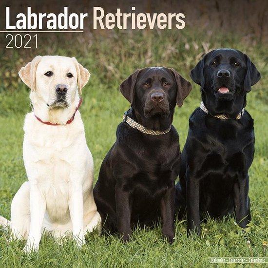 Labrador Retriever Mixed Kalender 2021