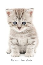 Internet Password Organizer (the Secret Lives of Cats)