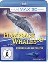 Judson, S: Humpback Whales - Buckelwale im Pazifik