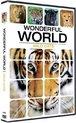 Wonderful World - Wild Cats
