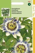 Passiebloem Bloemzaad - Passiflora Coerulea