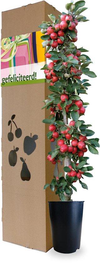 Minitree Appelboom Felicitatieboom