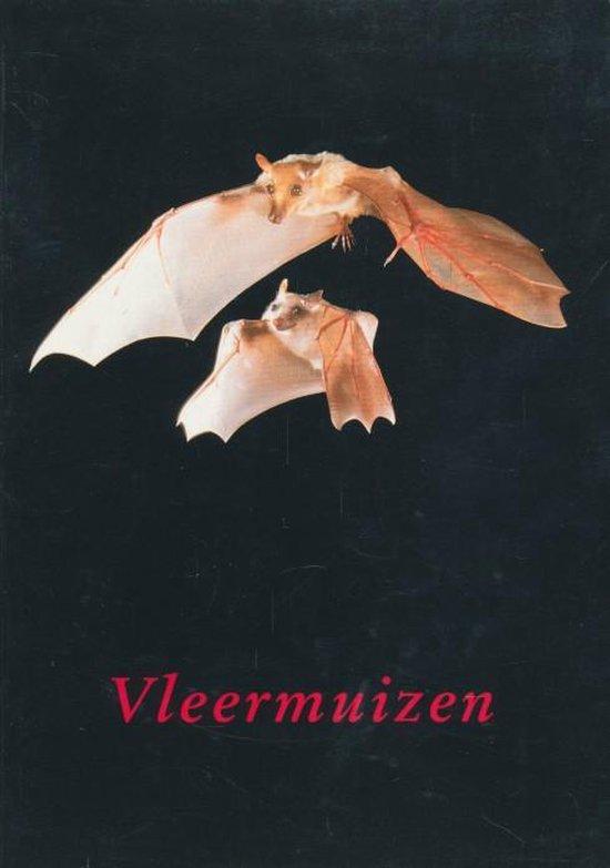 Vleermuizen - Voute A |