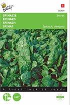 Spinazie Nores 15 g - Spinacia oleracea - set van 8 stuks