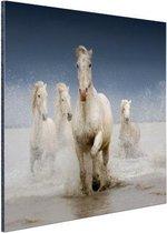 Witte paarden in het water Aluminium 60x40 cm - Foto print op Aluminium (metaal wanddecoratie)