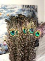 Prachtige Pauwen Veren | 10 Stuks | 70-80 CM | Decoratie Pauwenveren |
