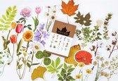 Kaartenset Bloemen - 30 kaarten - Flower Cards