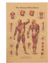 Posterset Het Menselijk Lichaam Spieren en Skelet Vintage Posters 42x30cm