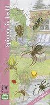 In beeld 20 - Spinnen in beeld