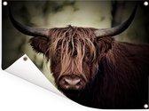 Donkere afbeelding van een Schotse hooglander Tuinposter 80x60 cm - Tuindoek / Buitencanvas / Schilderijen voor buiten (tuin decoratie)