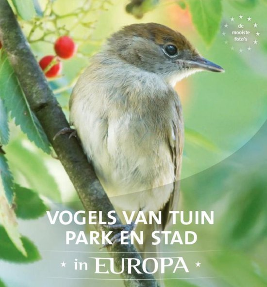 Vogels van tuin, park en stad in Europa - Jaap Schelvis |