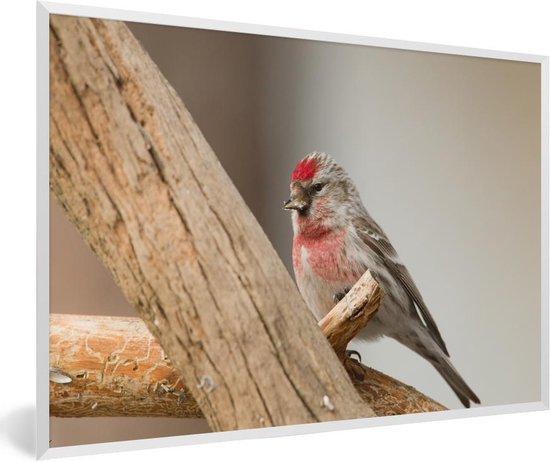 Beste bol.com   Foto in lijst - Een barmsijs zit op een houten paal HO-04