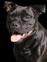 American Staffordshire Terrier Notebook