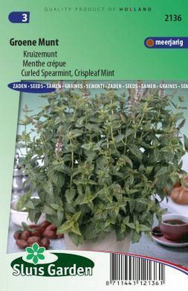 Sluis Garden - Groene Munt, Kruizemunt (Mentha spicata crispa)