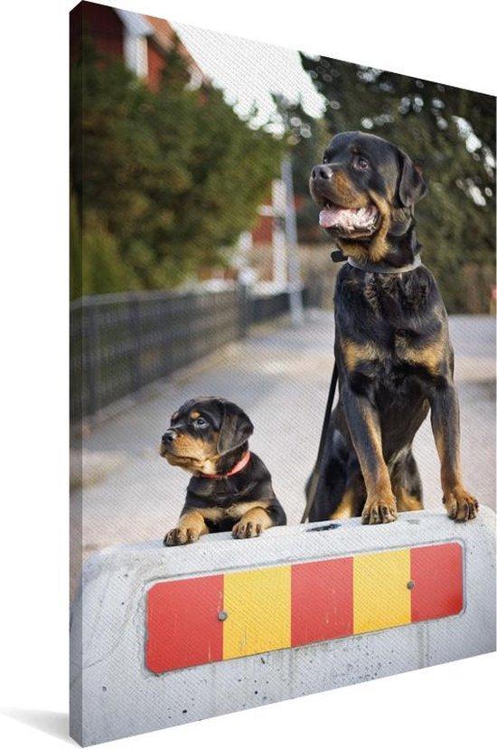 Rottweiler-puppy naast een volwassen rottweiler Canvas 80x120 cm - Foto print op Canvas schilderij (Wanddecoratie woonkamer / slaapkamer) / Huisdieren Canvas Schilderijen