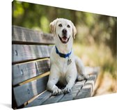 Labrador Retriever ligt op een bankje Canvas 180x120 cm - Foto print op Canvas schilderij (Wanddecoratie woonkamer / slaapkamer) / Huisdieren Canvas Schilderijen XXL / Groot formaat!