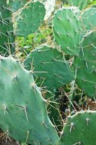 Spiky Green Cactus Plant Journal