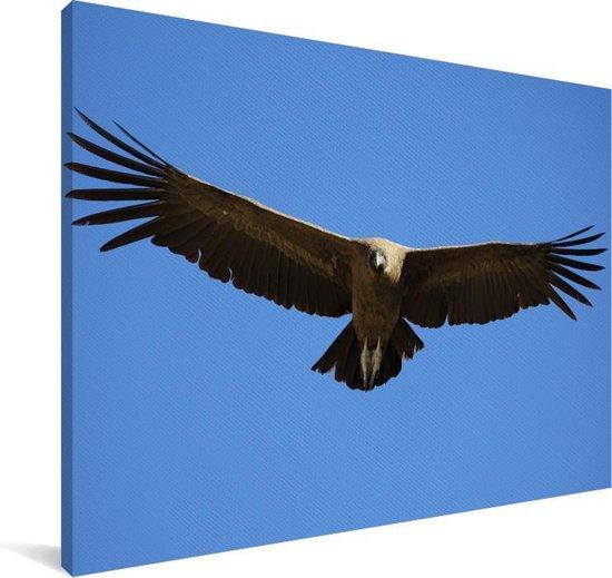 Een Andescondor met gespreide vleugels Canvas 90x60 cm - Foto print op Canvas schilderij (Wanddecoratie woonkamer / slaapkamer)
