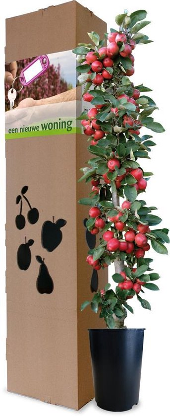 Minitree Appelboom Nieuwe Woning