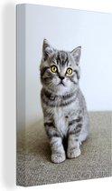 Grijze kitten met gele ogen Canvas 120x180 cm - Foto print op Canvas schilderij (Wanddecoratie woonkamer / slaapkamer) / Huisdieren Canvas Schilderijen XXL / Groot formaat!