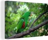 Groene edelpapegaai wandelt op een takje Canvas 120x80 cm - Foto print op Canvas schilderij (Wanddecoratie woonkamer / slaapkamer)