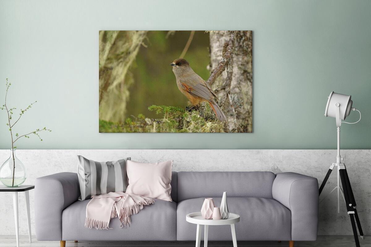 Taigagaai kijkt voor zich uit vanaf een takje Canvas 140x90 cm - Foto print op Canvas schilderij (Wanddecoratie woonkamer / slaapkamer)