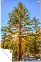 Zon in het Nationaal park Sequoia in de winter in de Verenigde Staten Tuinposter 40x60 cm - klein - Tuindoek / Buitencanvas / Schilderijen voor buiten (tuin decoratie)