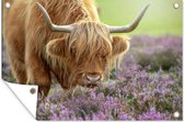 Portret van een Schotse hooglander tussen paarse bloemen Tuinposter 90x60 cm - Tuindoek / Buitencanvas / Schilderijen voor buiten (tuin decoratie)
