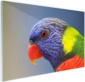 Regenbooglori Glas 180x120 cm - Foto print op Glas (Plexiglas wanddecoratie) XXL / Groot formaat!