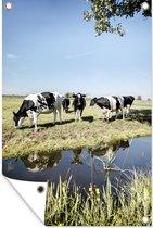 Tuinposter Koeien - Water - Reflectie - 80x120 cm - Tuin