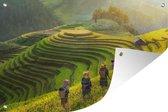 Tuinposter Vietnam - Vrouwen door rijstplanten 120x80 cm - Tuindoek/Buitencanvas/Schilderijen voor buiten (tuin decoratie)