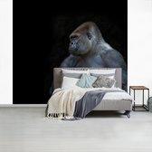Fotobehang vinyl - Gespierde Gorilla op een zwarte achtergrond breedte 265 cm x hoogte 240 cm - Foto print op behang (in 7 formaten beschikbaar)