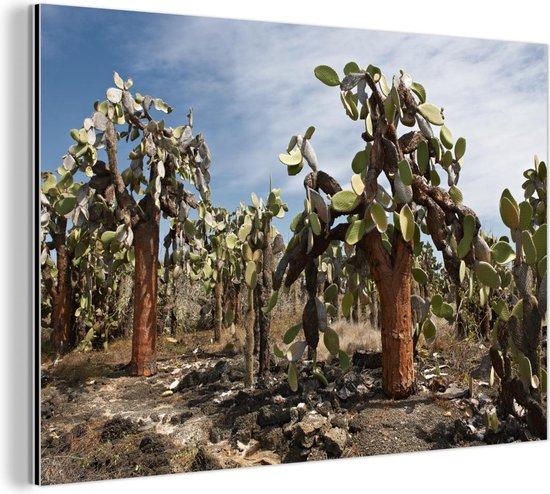 Cactussen Galapagoseilanden bij Ecuador Aluminium 90x60 cm - Foto print op Aluminium (metaal wanddecoratie) / Zee en Strand