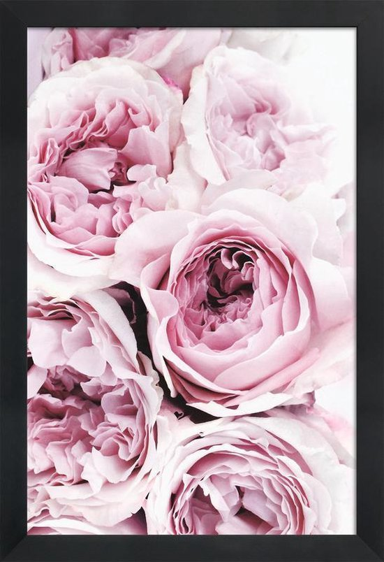 JUNIQE - Poster met houten lijst Roze rozen foto -20x30 /Roze